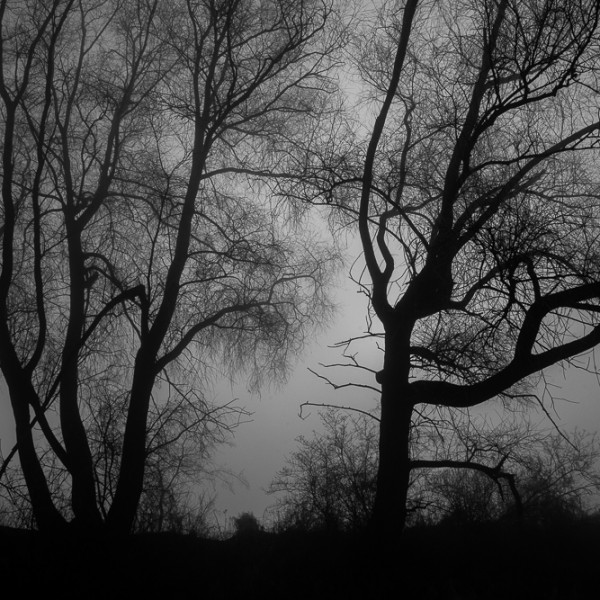 Wisla trees