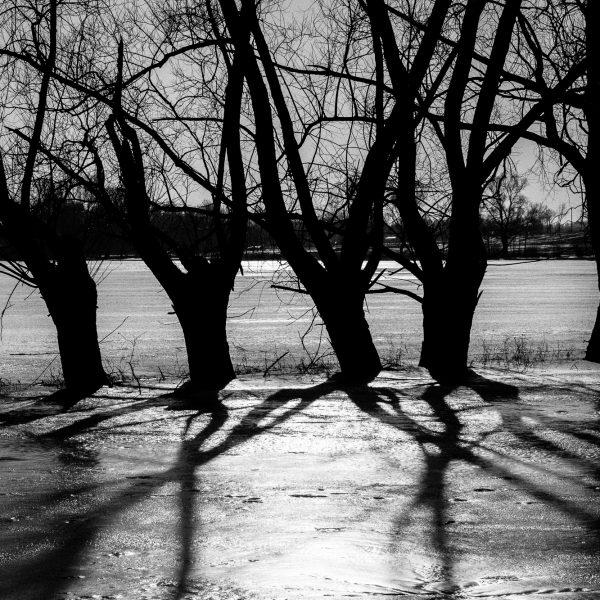 drzewa_01-3