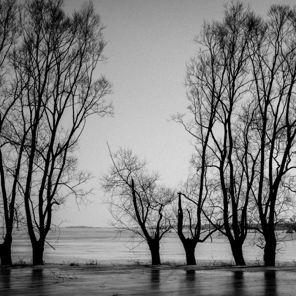 drzewa_01