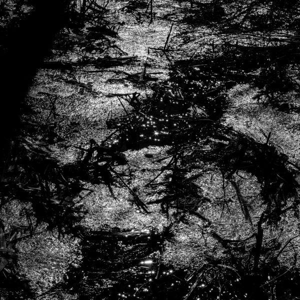 drzewa_04