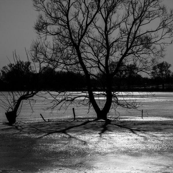 drzewa_07