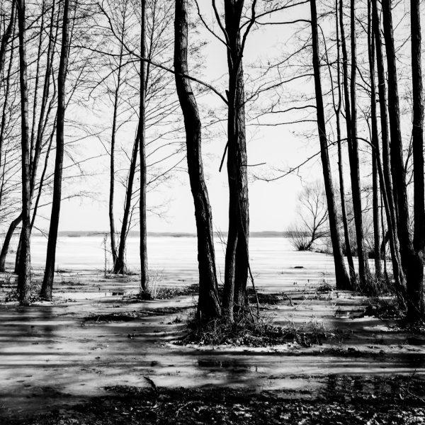 drzewa_08