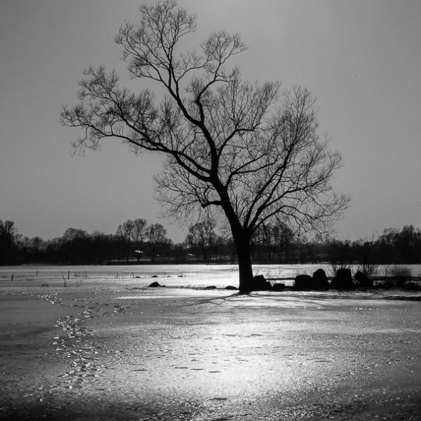 Drzewa znad Biebrzy