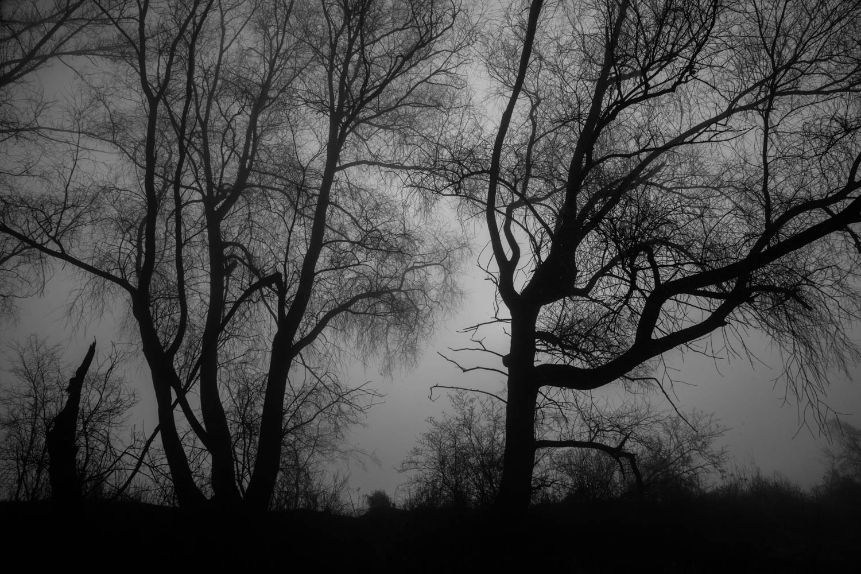 Drzewa znad Wisły