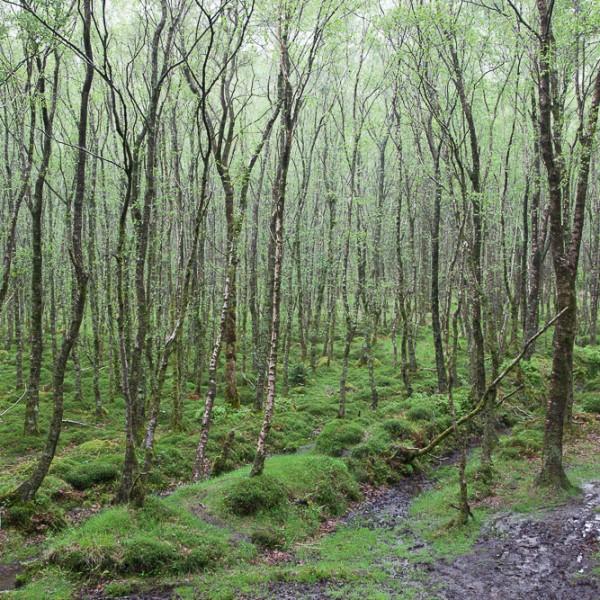 Green Ireland